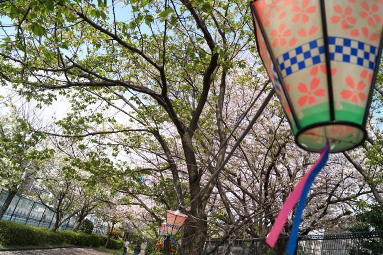 柴島浄水場桜並木通り抜け