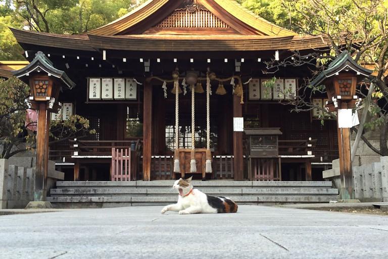 松山神社 秋祭り