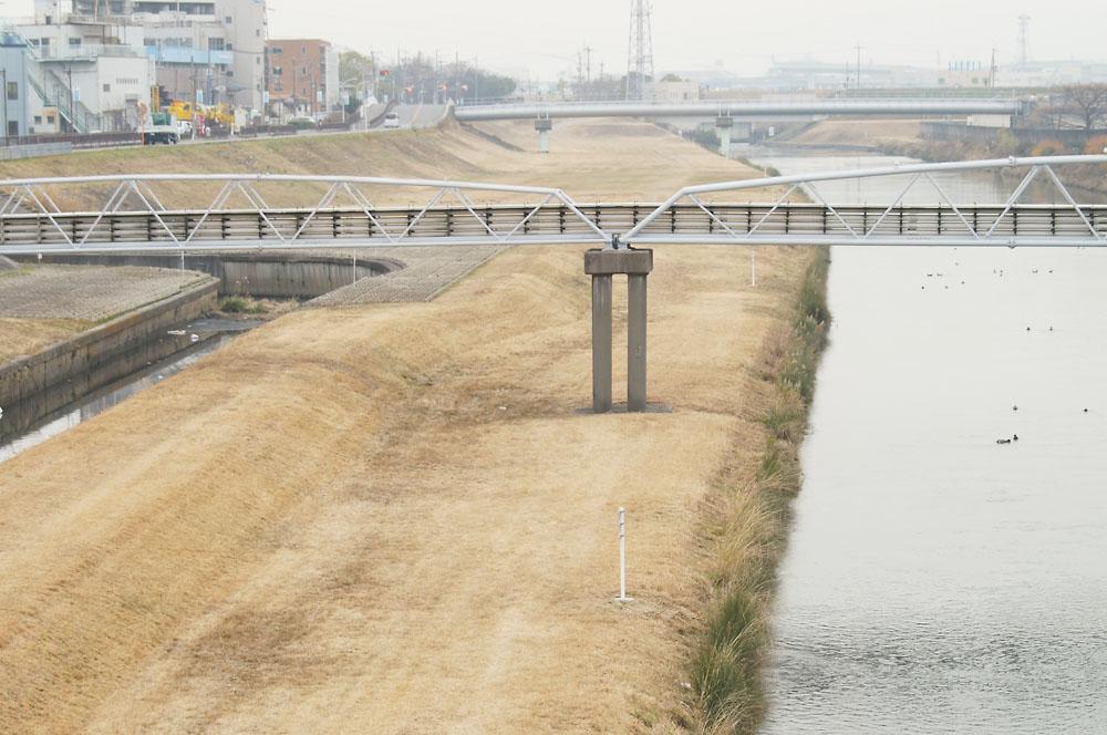 神崎川 水鳥