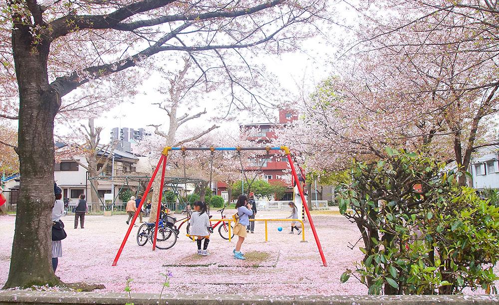 菅原北公園 桜