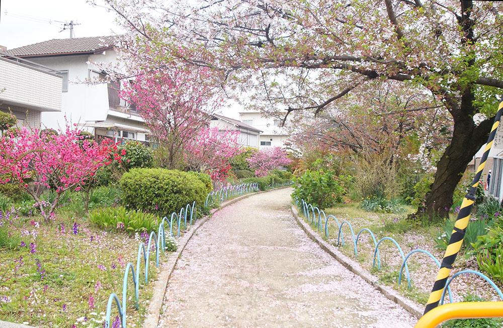 北江口 公園 桜
