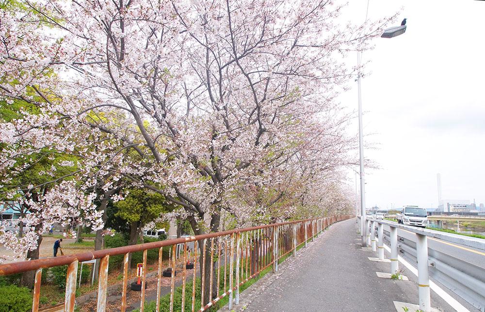 神崎川 桜 井高野