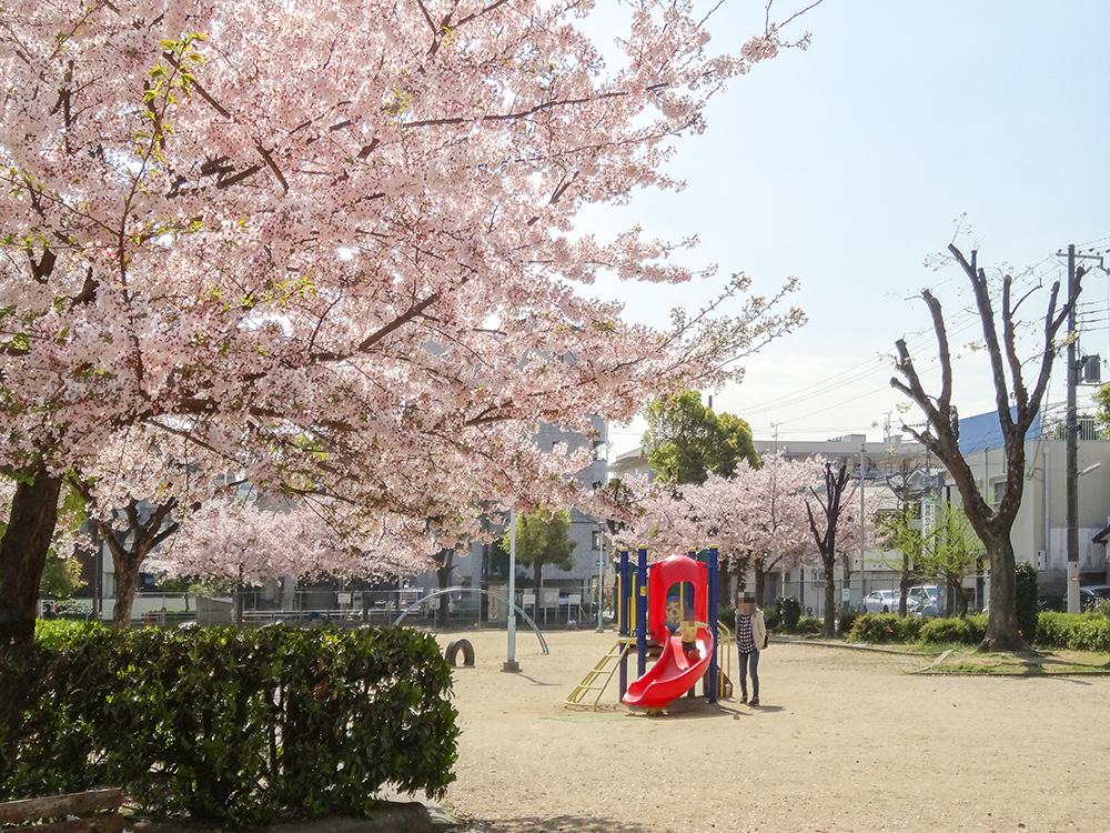 多幸公園桜