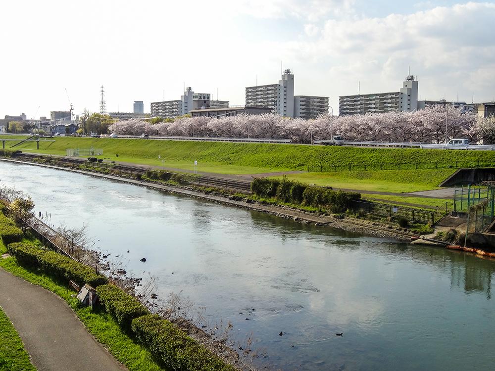 桜2017神崎川