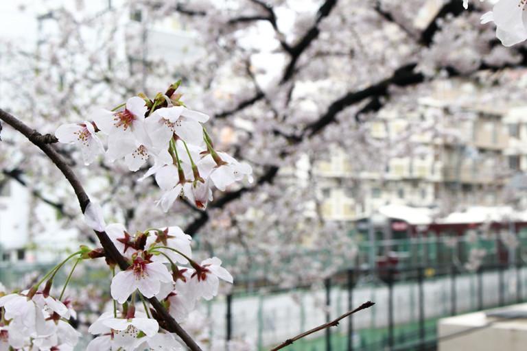 新年度の運勢はいかに!?九星気学で占う「上新庄の母」4月の運勢ランキング!