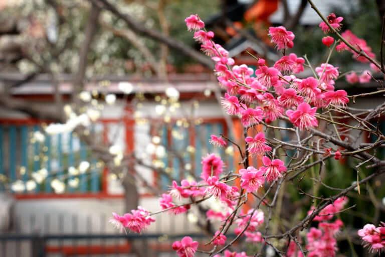 悪月を抜け、芽吹くのは一体?九星気学で占う「上新庄の母」3月の運勢ランキング!